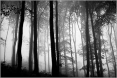 Gallery print  Foggy Woods - The Irish Image Collection