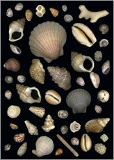 Wall sticker Various Sea Shells