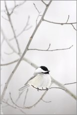 Gallery print  Bird on a branch - Richard Wear