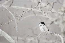 Gallery Print  Small Bird On Tree Branch - Richard Wear