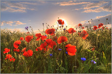 Wall Sticker  Poppies in light - Steffen Gierok