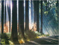 Wall Sticker  Morning Light in the Forrest - Martina Cross
