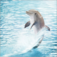 Wall sticker dolphin