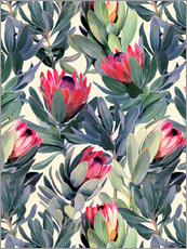 Gallery print  Painted Proteas - Micklyn Le Feuvre