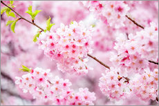 Wall sticker  Japanese cherry blossom in spring - Jan Christopher Becke