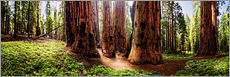Wall sticker  Sequoia giant, panoramic - Michael Rucker