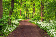 Wall sticker  Path through Forest full of Wild Garlic during Spring - Andreas Wonisch