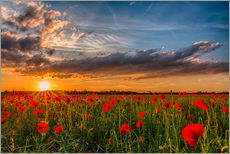 Gallery print  Field of Poppies, Bavaria - Achim Thomae