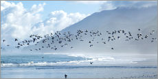 Gallery print  Terns at Rapahoe beach - Nicola M Mora