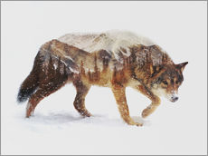 Wall sticker  Arctic wolf - Andreas Lie