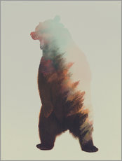 Gallery print  Norwegian Woods The Bear - Andreas Lie