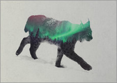 Gallery Print  Lynx in the aurora borealis - Andreas Lie