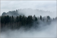 Gallery print  Fog in the forest - Sebastian Jakob
