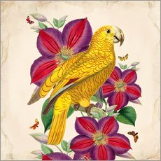 Wall sticker Oh My Parrot V