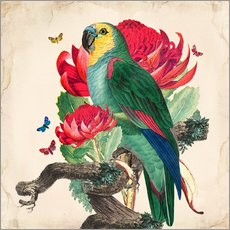 Wall sticker Oh My Parrot X