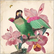 Wall sticker Oh my parrot VIII