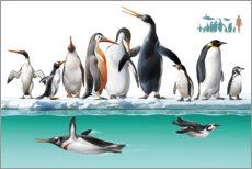 Wall sticker  Adelie penguins on an iceberg - Tom Murphy