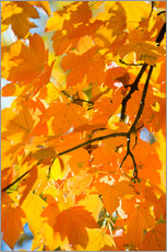 Wall sticker Autumnal maple leaves