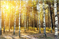 Wall sticker  birch trees in a autumn forest