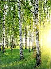 Gallery print  Birches in summer forest