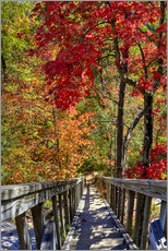 Gallery Print  Wooden stairs in Autumn forest
