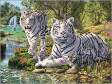 Gallery print  White Tiger Clan - Steve Read