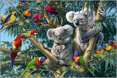 Wall sticker  Koala Outback - Steve Read