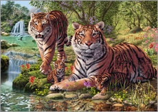 Gallery print  Tiger Clan - Steve Read
