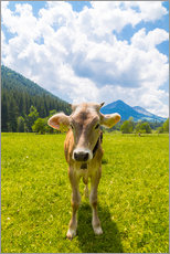 Gallery print  Young Calf - Michael Helmer