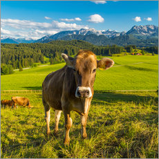 Wall Stickers  Funny Cow in the Alps - Michael Helmer