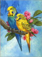 Gallery Print  Budgies on Blue Background - John Francis