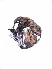 Wall Sticker  Whippet at rest, colour pencil portrait - Jim Griffiths