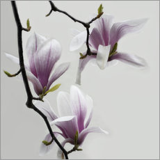 Wall sticker  Magnolias - Claudia Moeckel