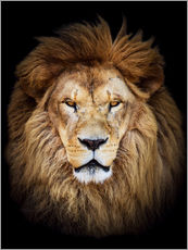 Gallery print  King of the Jungle Portrait