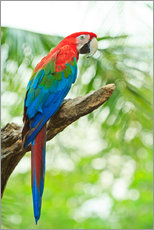 Wall Stickers  Tropical parrot