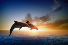Wall sticker  Dolphins in the sunset