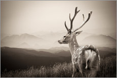 Gallery print  Stag in the Mountains