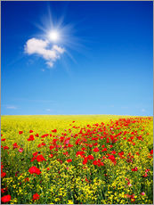 Wall sticker  Sunny landscape with flowers in a field