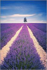 Gallery print  Lavender Field with tree in Provence, France