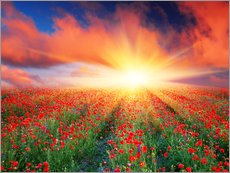 Wall Stickers  Sunset over a field of red poppies