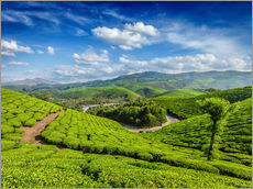 Wall Stickers  Green tea plantations in morning