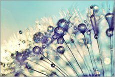 Wall sticker  Dandelion Dream - Julia Delgado