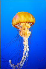 Wall sticker  Orange jellyfish in blue ocean