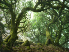 Wall sticker  Fairy Tale Forest with Laurel Trees on Madeira - Andreas Wonisch