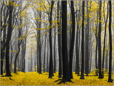 Gallery print  Golden Grove - tvurk photography