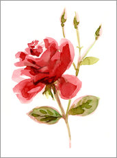 Gallery print  Red Rose - Verbrugge Watercolor