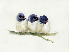 Verbrugge Watercolor - 3 little swallows