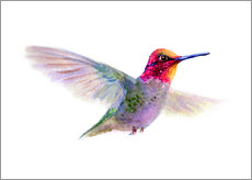 Wall sticker Hummingbird