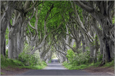 Wall sticker  Dark Hedges in Ireland - Dieter Meyrl