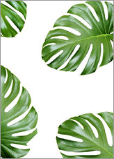 Wall sticker  Attack of the Monstera - Finlay and Noa